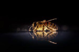 bijenbekje-kopen
